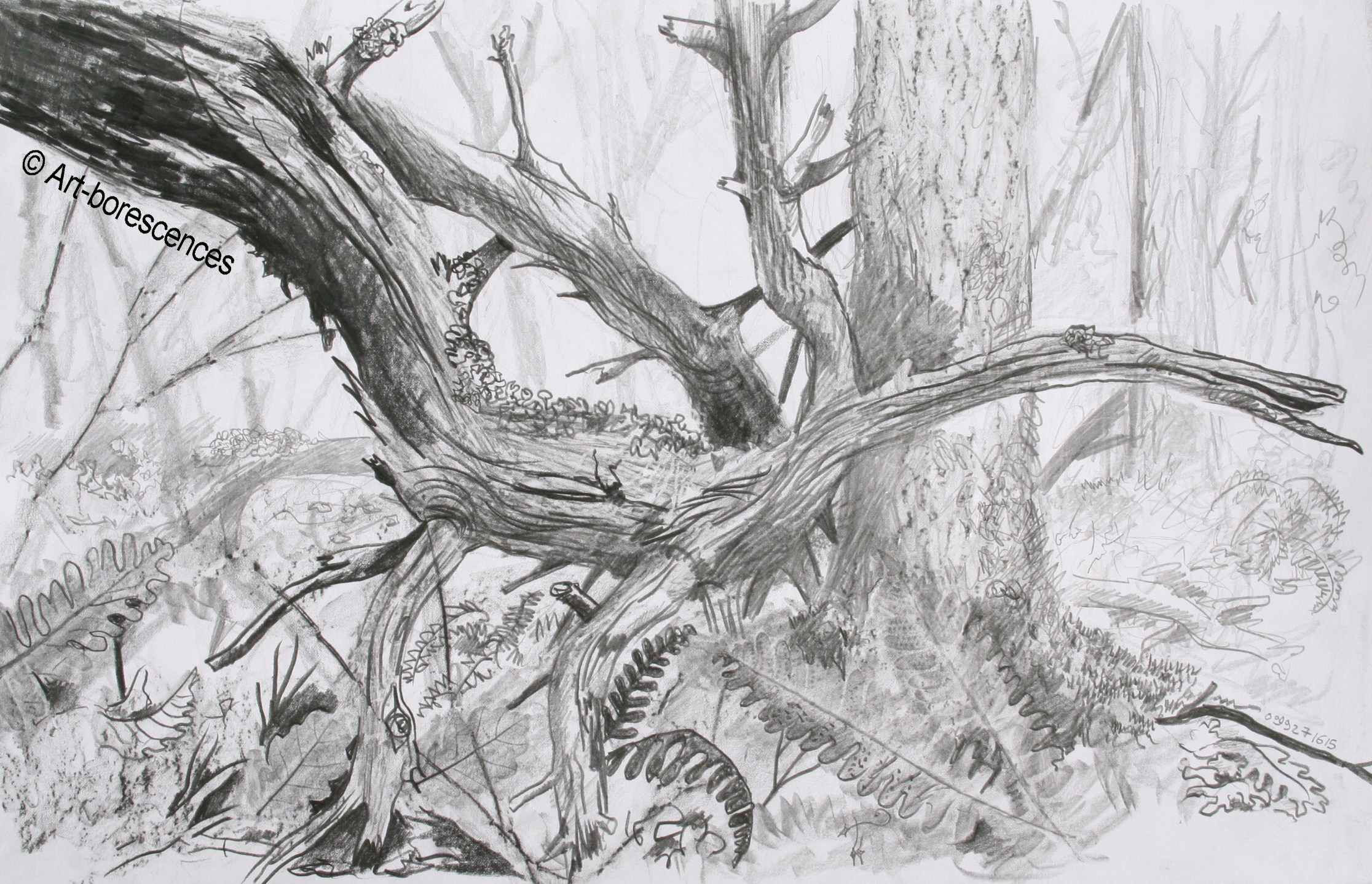 Dessins mine graphite art borescences arbres - Dessin branche d arbre ...