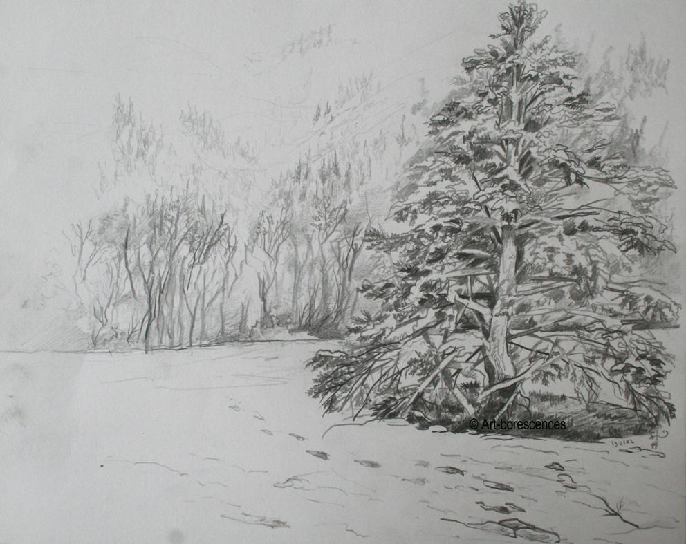 Arbres entiers art borescences arbres - Dessiner un arbre ...