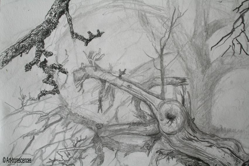 Mousse des arbres awesome fond ducran fort arbres tang herbe mousse vert with mousse des arbres - Mousse sur les arbres ...