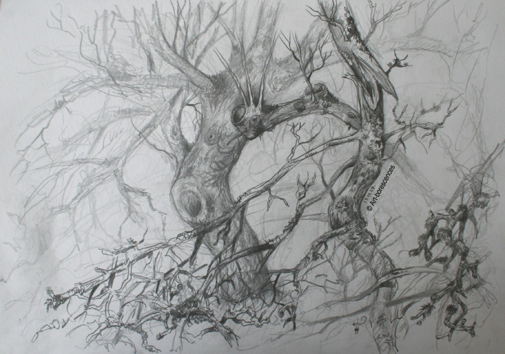 art-borescences graphite branche arbre espace profondeur