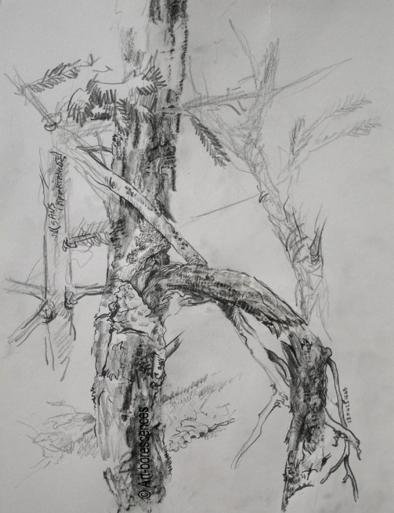 art-borescences apprendre a dessiner