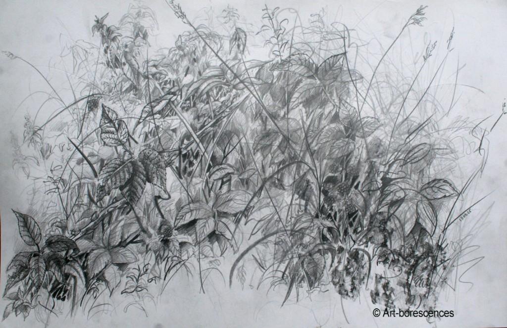 art-borescences 131015