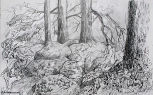 art-borescences_150821_ (4)_dessin_arbre_foret_souche_mousse