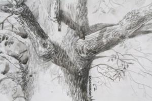 art-borescences_dessin_arbre_09