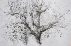 art-borescences_dessiner_arbre_relief_3d_08